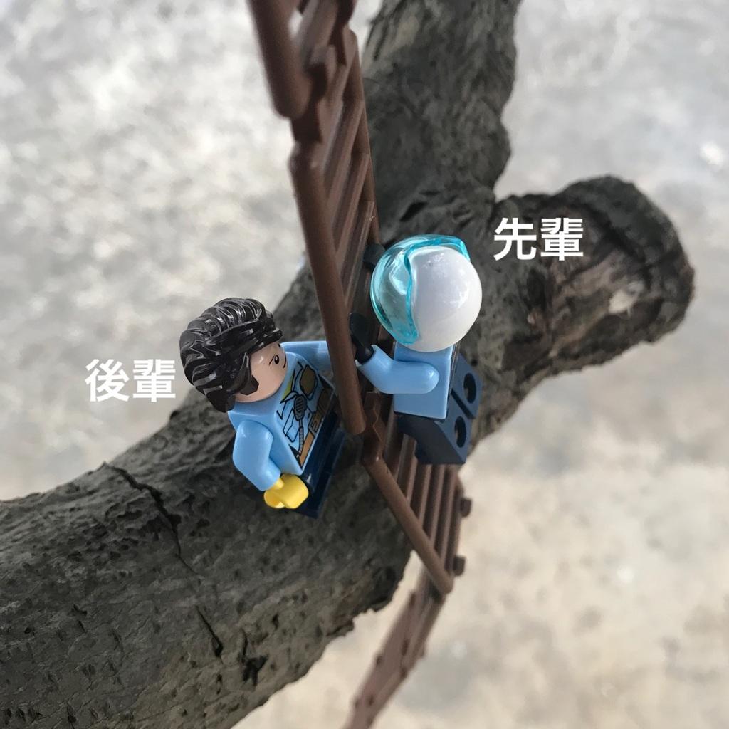 木登り調査3(謎のはしご)