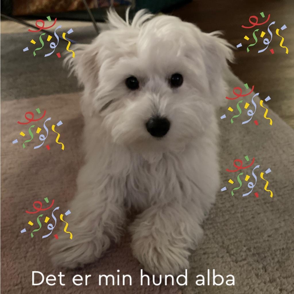 Det er min hund alba