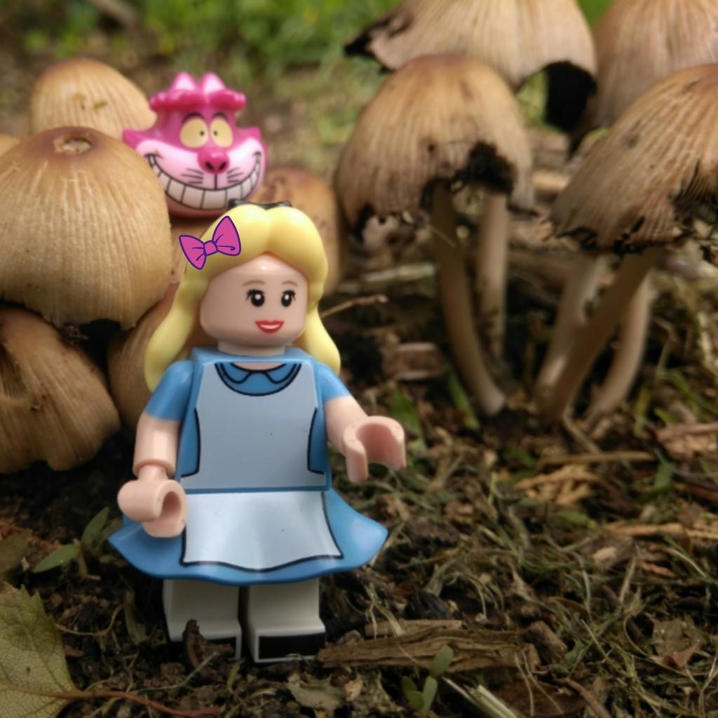 Alice au pays des merveilles.    DVD