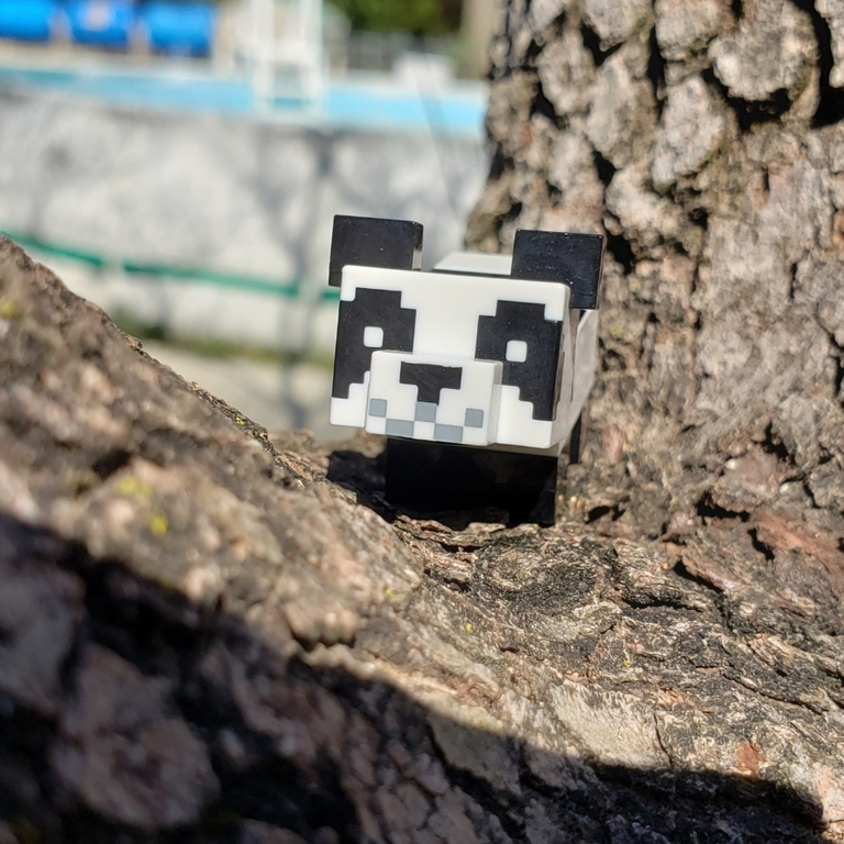 Patrick the panda is on a tree