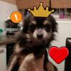 PrincesseWindraParfaite