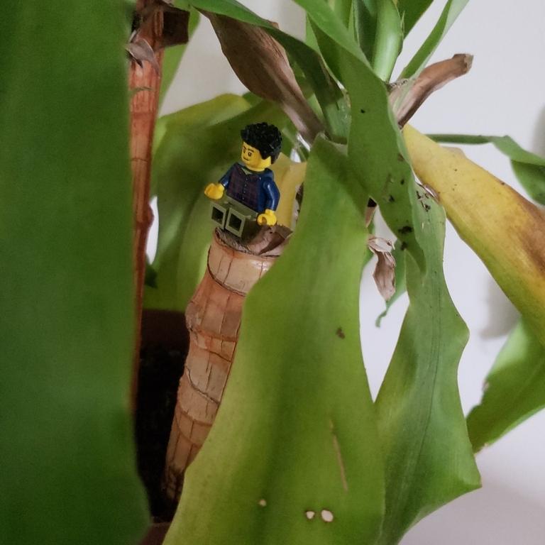 O boneco de lego com a planta